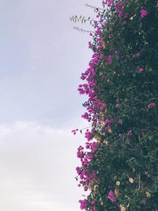 smell-roses-1